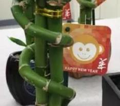 Coles makes a Monkey of Chinese New Year - Mumbrella