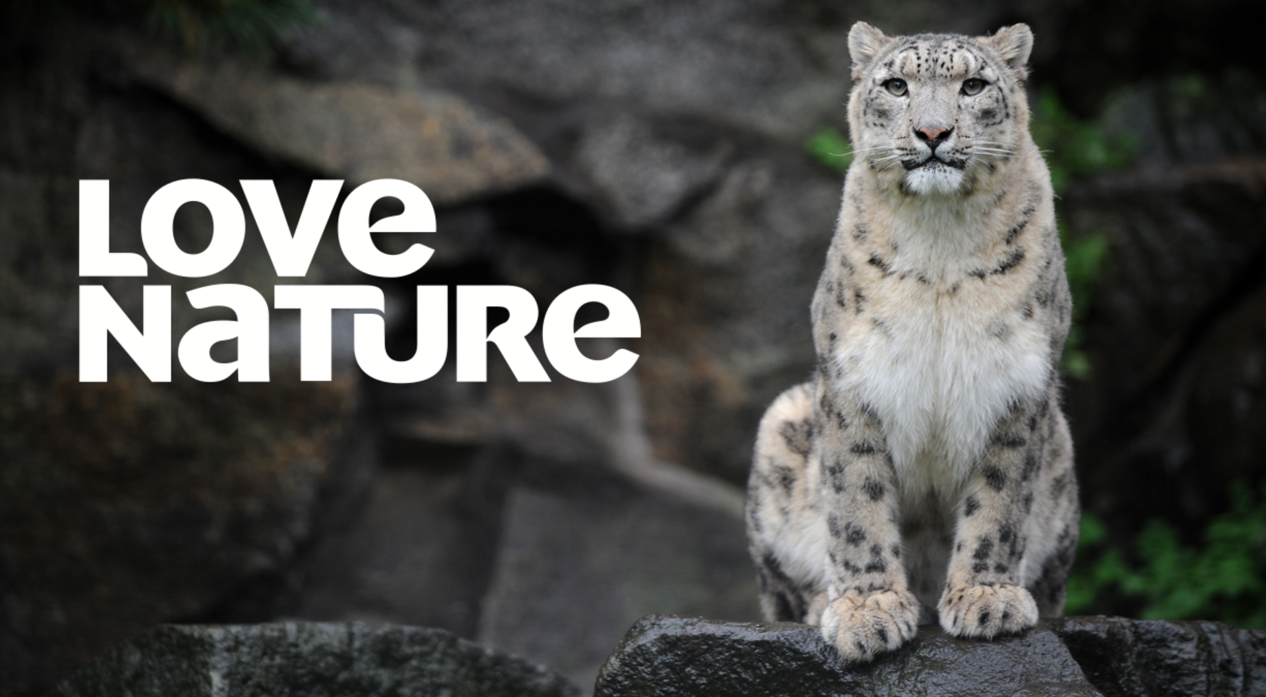 Image of: Pbs New Animal And Nature Streaming App love Nature Launches Mumbrella New Animal And Nature Streaming App love Nature Launches Mumbrella